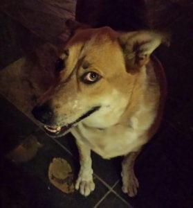 Our judgemental dog, Hati.