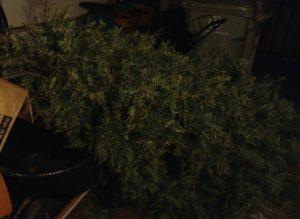 Poor sad Christmas tree